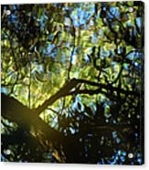 Deep Forest Light Acrylic Print