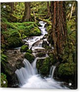 Deep In The Forest Acrylic Print by Pamela Winders