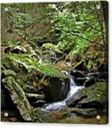 Deep In The Woods Acrylic Print