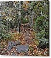 Deep In The Woods Acrylic Print by Susan Leggett