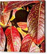Deep Into Autumn Acrylic Print