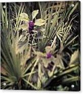 Deep Purple Berries Acrylic Print by Chasity Johnson