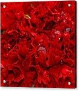 Deep Red Carnation Acrylic Print