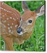 Deer 21 Acrylic Print