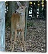 Deer 3 Acrylic Print