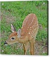 Deer 7 Acrylic Print