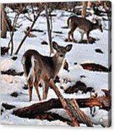 Deer And Snow Acrylic Print