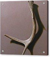 Deer Antler Acrylic Print by Timothy Jones