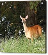Deer At Dusk V3 Acrylic Print