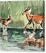 Deer At The River Acrylic Print