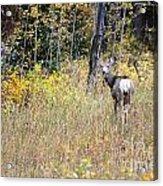 Deer Camoflauged Acrylic Print