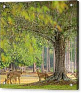 Deer Crossing Acrylic Print