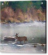 Deer Crossing Stream Panoramic Acrylic Print