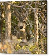 Deer Frame Acrylic Print