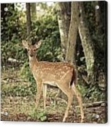 Deer Friend Acrylic Print