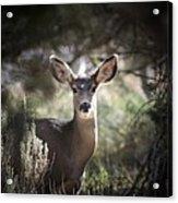 Deer I Acrylic Print