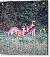 Deer-img-0158-001 Acrylic Print