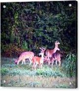 Deer-img-0158-003 Acrylic Print