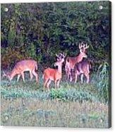 Deer-img-0160-005 Acrylic Print