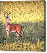 Deer-img-0627-002 Acrylic Print
