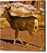 Deer In A Different Light Acrylic Print