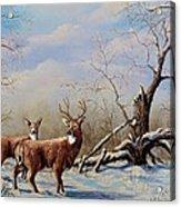 Deer In Crete Acrylic Print