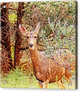 Deer In Forest Acrylic Print