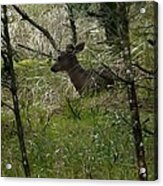 Deer In The Forest Acrylic Print