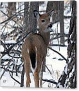 Deer In The Grove Acrylic Print