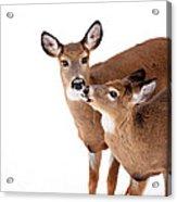 Deer Kisses Acrylic Print