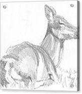 Deer Lying Down Drawing Acrylic Print