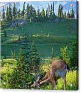 Deer Mountain Acrylic Print