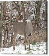 Deer Of Beauty  Acrylic Print