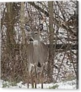 Deer Of Wonder Acrylic Print