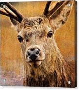 Deer On Canvas Acrylic Print