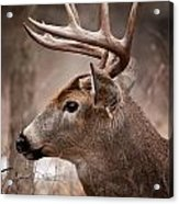 Deer Pictures 491 Acrylic Print