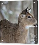 Deer Profile Acrylic Print