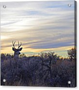 Deer Ridge - Sunset Buck Acrylic Print