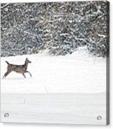 Deer Running Acrylic Print