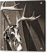 Deer Skull In Sepia Acrylic Print by Brooke T Ryan