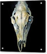 Deer Skull With Aura Acrylic Print