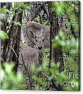Deer Through The Trees Acrylic Print