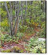 Deer Trail Early Autumn Pocono Mountains Pennsylvania Acrylic Print