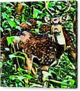 Deer's Green Day Acrylic Print