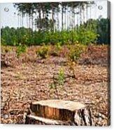 Woods Logging One Stump After Deforestation  Acrylic Print