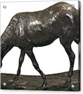 Degas, Edgar 1834-1917. Horse Acrylic Print