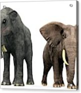 Deinotherium And Elephant Compared Acrylic Print