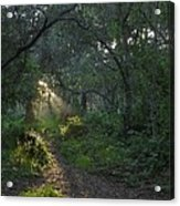 Del Monte Forest Pacific Grove Ca Acrylic Print by Elery Oxford