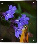 Delaware Skipper Butterfly Acrylic Print