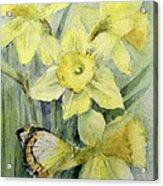 Delias Mysis Union Jack Butterfly On Daffodils Acrylic Print